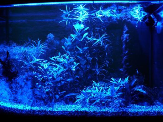 Show je aquarium showcase van superfish for Superfish led verlichting